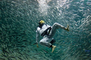 A diver surrounded by sardines performs Taekwondo during a promotional diving performance for summer vacation visitors at the Coex Aquarium in Seoul July 22, 2011. REUTERS/Jo Yong-Hak