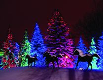 Decorated trees light a laneway at the annual Christmas light display at Spruce Meadows in Calgary. (Postmedia News)