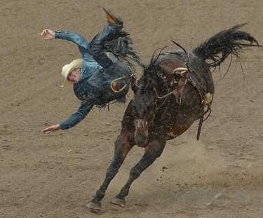 Tyler Corring of Hastings, MN is  bucked of a horse  called Stars Alive during the Saddle Bronc event at Calgary Stampede rodeo in Calgary, Alberta on July 6, 2012. (AL CHAREST/QMI AGENCY)