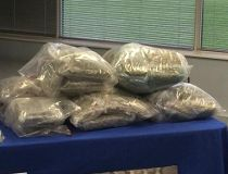 Halton Regional Police seized 105 pounds of pot during an eight-month drug investigation. (CHRIS DOUCETTE/Toronto Sun)