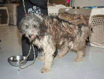 200 badly neglected dogs seized from rural Alberta property