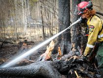 An Alberta Wildfire firefighter puts out hotspots on the North Wabasca Lake fire.