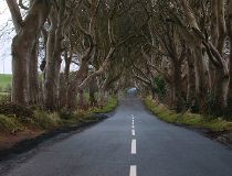 Dark Hedges_5