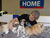 Fort McMurray pets Dale Kossey with his three dogs Elmo, Gizmo, and Lacey,