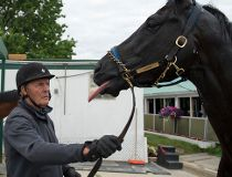 attfield01
