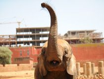 Elephant at the Rabat zoo