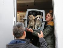 South Korean dog meat farm rescued