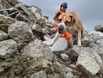 Search and rescue dogs scour rubble in Sherwood Park to prepare for disaster situations