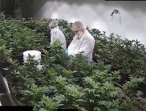 Invictus MD's Acreage Pharms,