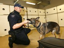 Fentanyl sniffing police dogs