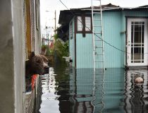 Hurricane Maria dog