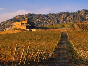 Burrowing Owl Estate Winery in Oliver was one of seven B.C. vineyards to provide soil, grape and wine samples to St. Thomas More Collegiate students.