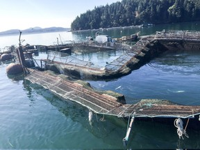 Critics of open-net fish farms say the escape of 305,000 Atlantic salmon in Washington state should spur Canada to support a transition to land-based aquaculture. The damaged Cooke Aquaculture net pen near Cypress Island in Washington state.
