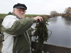 Michael Krygier, who is the president of the strata at Mariners Village, which is adjacent to the affected pond with an invasive aquatic plant that is threatening to jump from a drainage pond to an ecologically sensitive area, in Steveston, BC., November 13, 2017.