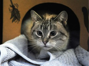 The College of Veterinarians of British Columbia is banning the practice of declawing cats unless it is necessary as an appropriate medical therapy.