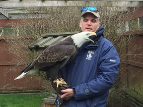 Rob Hope, the OWL rehab centre's raptor care manager, says four lead-poisoned eagles brought into the centre in the last two weeks have died. Hope here shows off a healthy eagle that has been at the facility for the past 15 years.
