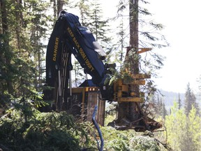 A feller buncher machine similar to this one felled trees on a private property near Nanaimo without permission and a judge has awarded $80,000 in damages.