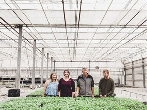 The Warmerdam family planted one of B.C.'s first fields of hemp to be harvested for CBD oil.