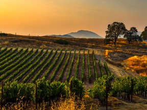 Vancouver International Wine Festival attendees will be able to sample wines from the Napa Valley and other regions across California.