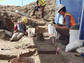 Palaeontologists carefully unearth the bones of a 12,500-year-old prehistoric bison near B.C. Hydro's Site C dam construction site, which was discovered by construction crews and is one of the more significant finds under the heritage management plan for the project.
