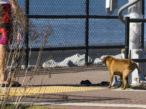 A White Rock council motion passed last month to allow dogs on the beachside city's promenade during the off-season from Oct. 1 to March 31 has split folks into tail-wagger versus growler camps.
