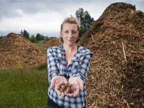 The B.C. government is offering money to hazelnut growers to help them replant orchards decimated by blight. In this 2015 file photo, Shelly Krahn of Canadian Hazelnut Inc. stands in front of a pile of mulched hazelnut trees.