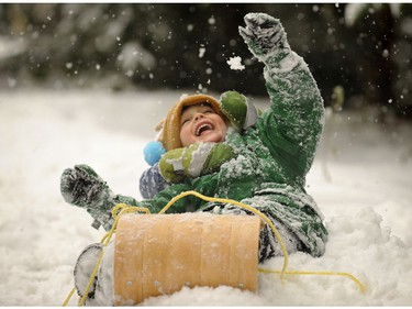 Four year old Alexander Ganske  took advantage of the fresh  snowfall  to test out his  toboggan in hills of Lions Bay, on Nov. 24,  2010.