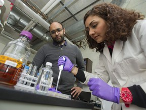 Assistant Prof. Vikram Yadav looks on as PhD student Parisa Chegounian works in their lab at the Chemical and Biological Engineering Department Friday at the University of B.C. Yadav and his team of graduate students are working to identify bacteria that consume toxins in oilsands tailings.