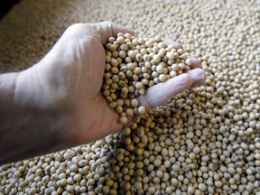 Canada's soybean exports to China rose 80 per cent to nearly 3.6 million tonnes in 2018 compared to a year earlier, as Beijing's 25 per cent tariff on U.S. soybeans upended global trade flows and sent Chinese buyers hunting for alternative suppliers.