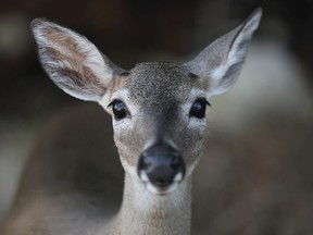 The B.C. government is tracking a new deer disease believed to be killing deer in the Gulf Islands.