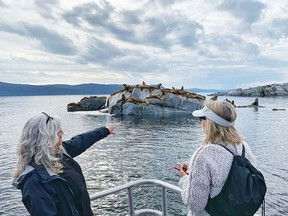 Egmont Adventure Centre takes wildlife seekers to see a colony of Stellar sea lions.