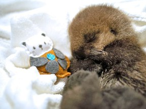An orphaned sea otter pup is now receiving around-the-clock care after being rescued last week. The pup is approximately 10-days-old and has been named Joey.