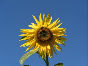 Environment Canada say we are in for a load of sunshine over the next few days.