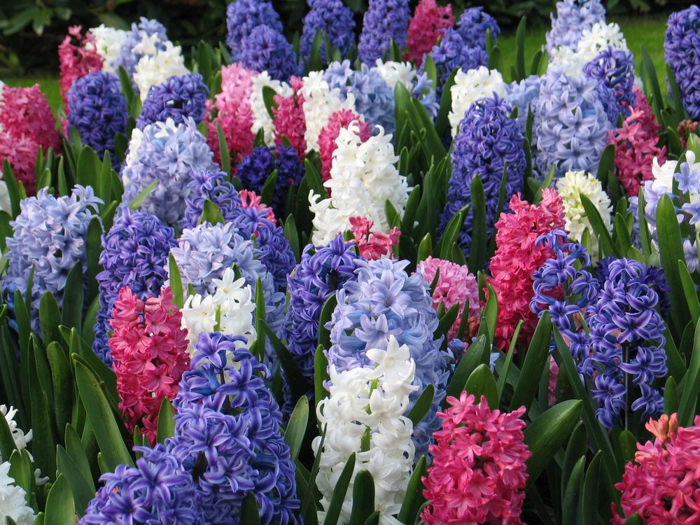 Brian Minter: Fall bulbs will put a spring in your garden's step