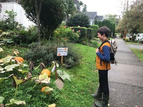 Henry looks out over his pumpkin patch growing in the family's front yard.  For Brian Minter garden pillar.