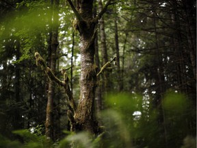 B.C. is already a leader in this regard, with about 52 per cent of the land base — or 95 million hectares — either protected or under some form of designation.
