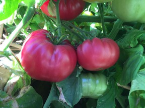 Determinate or indeterminate ... that is the question! Learn about the tomato varieties you grow, and record which were successful, so you can refine your mix year after year.
