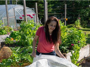 Niki Jabbour's raised beds are situated in a sunny location and protected by shade cloth on hot days.