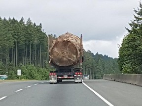 A photo of a massive old-growth tree being hauled away on Vancouver Island, taken byLorna BeecroftofNanaimo, has gone viral online and sparked outrage.