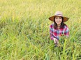 Baan Lao chef Nutcha Phanthoupheng at her rice farm in Thailand. The organic jasmine rice is grown on the farm and is sold by the kilogram at the restaurant.