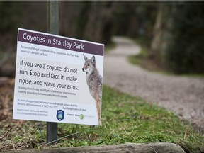 The B.C. Conservation Officer Service is urging the public to take precautions at Stanley Park, where a woman was bit by a coyote Wednesday.