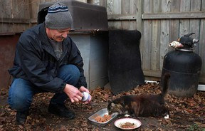 Mike Gabor feeds one of many feral cats at a cat colony in an east Windsor neighbourhood. (DAX MELMER/The Windsor Star)