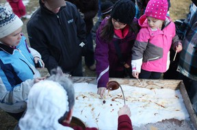 In this file photo, Nancy Hager, bottom, pours hot syrup over cold snow to produce taffy for families to taste at the Maple Syrup Festival at the John R. Park Homestead Conservation Area in Essex, Ont., Sunday, March 3, 2013.    (DAX MELMER/The Windsor Star)