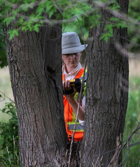 Biologist Holly Dodds takes inventory of tree species in the area of the new bridge crossing and plaza on Sandwich Street West near Chappus Street in West Windsor Thursday August 8, 2013. (NICK BRANCACCIO/The Windsor Star)
