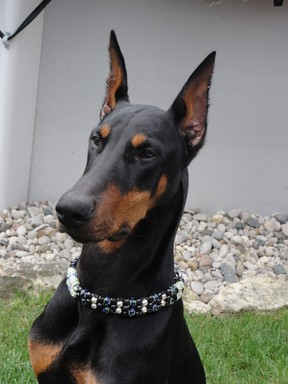 Jeff, a Doberman. (Vickie Weigel/special to The Star)