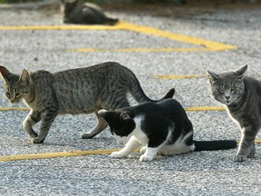 Feral cats are seen in this file photo. (Dan Janisse/Windsor Star)