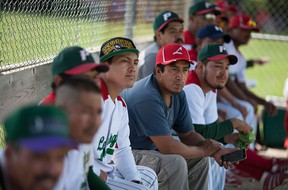 Members of the Leamington Greenhouse baseball team, a team made up of mostly migrant greenhouse workers, watch a play on the field from the dugout as they take on the Harrow Blues senior team at Pollard Park in Harrow, Sunday, July 17, 2016.