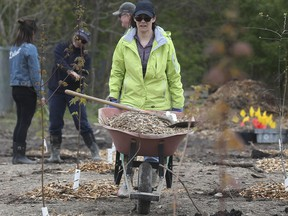 Carole Rundle hauls a load of mulch during the  10th annual Community Tree Plant at the City of Windsor's former wood recycling yard.