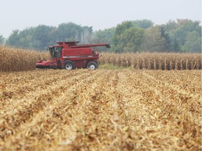 (file) Farmer Leonard Mailloux harvests corn in a field near Amherstburg on Oct. 3, 2013.