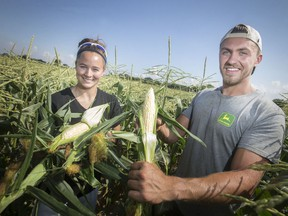 Troy Fetherston and Kay Laforet, left, employees at Lafferty's Sweet Corn, are pictured in the field as corn harvest begins, Wednesday, July 17, 2019.